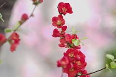 桜色の空間
