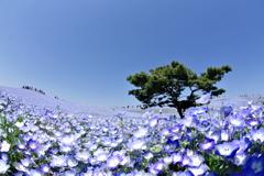 空と花と緑
