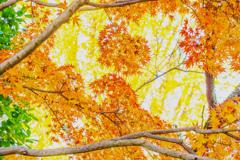 黄葉&紅葉