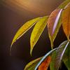 秋の気配2