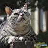 日向ぼっこの猫・・・いい陽だにゃ
