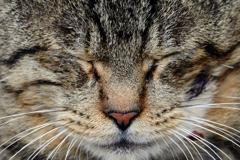 猫の御尊顔