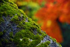 秋に苔生す