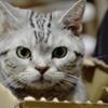 ダンボール突進猫