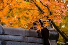 廣寿寺黄葉