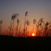 荒野の夜明
