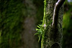 本土寺ー9 苔生す樹木