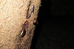 夜の森観察会