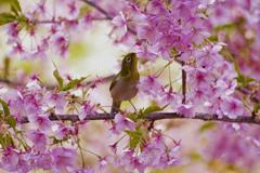 美味な桜印のハチミツ