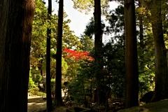 木立からの紅葉