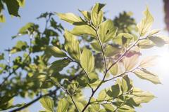 春の午後の日差し