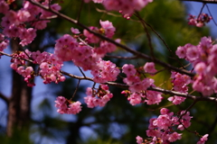 春の訪れ4