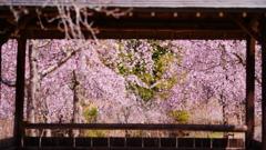 春の訪れ1