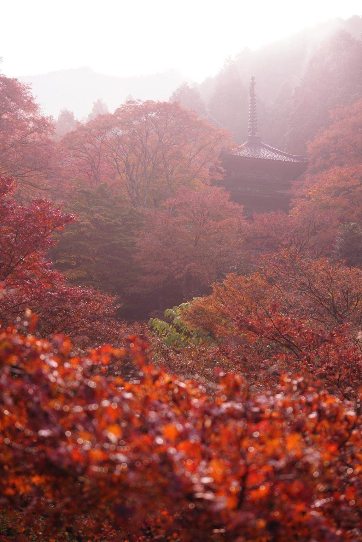 朝もやに煙る高源寺