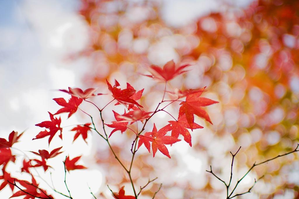 足早に過ぎゆく秋