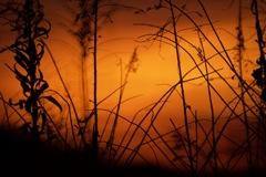 倒景に映える雑草