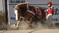 ばんえい競馬の迫力