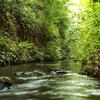 玉川上水散策