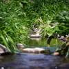 春の小川。