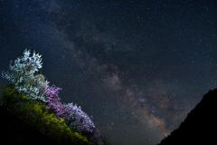 銀河の谷に咲く花は・・・