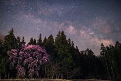 春の夜の夢-1