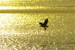 ある鳥の朝(4)