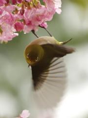 春雨ツアー(3)