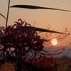 秋風のシャドウ(2)