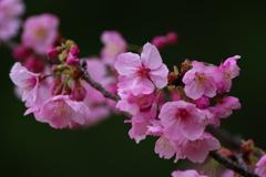 離春(2)
