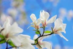 春分の頃(6)