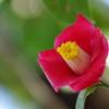 春となり(6)