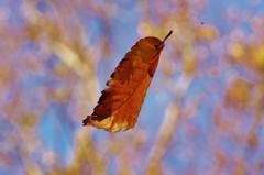 小さい秋の色(5)