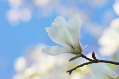 春分の頃(7)