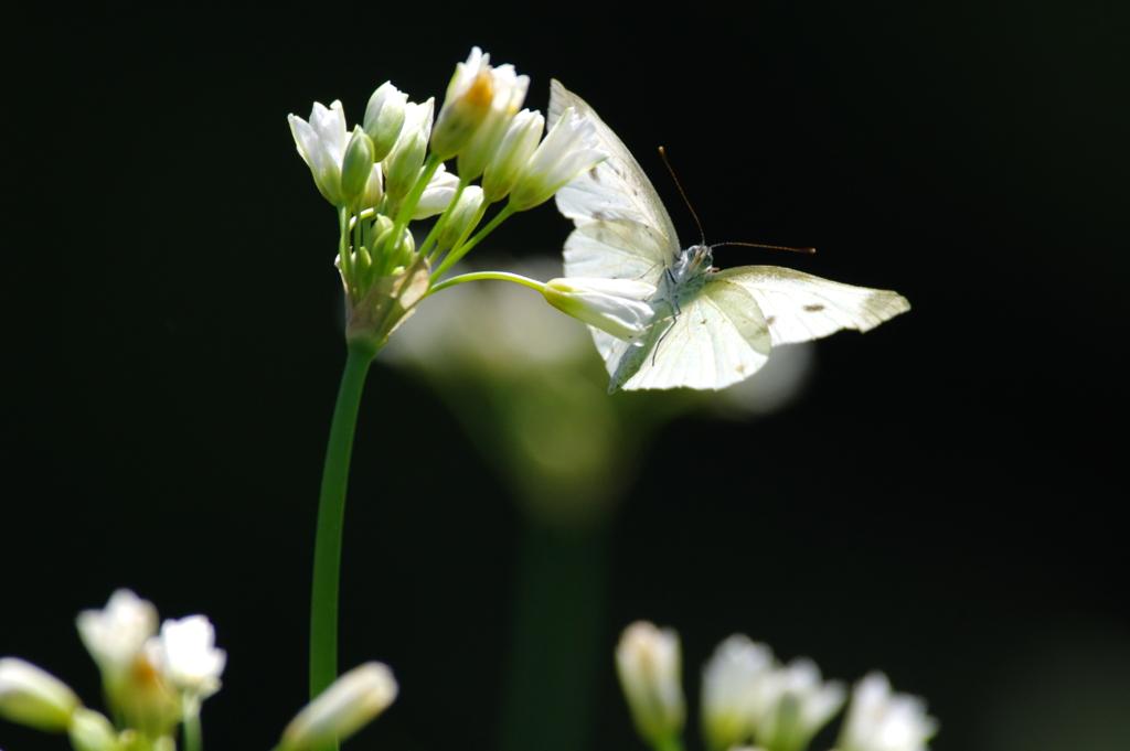 白い花(2)