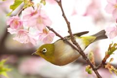 春雨ツアー(5)