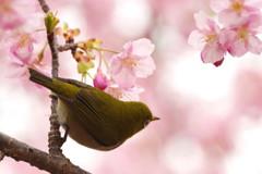 春雨ツアー(4)