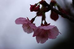 離春(1)
