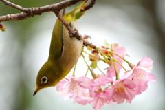春雨ツアー(7)