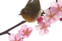 春雨ツアー(9)
