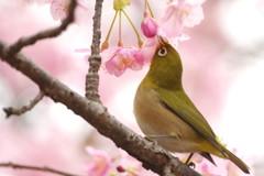 春雨ツアー(8)