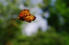夏の虫(3)