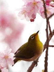 春雨ツアー(2)