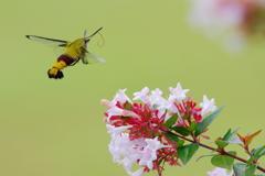 夏の虫(2)