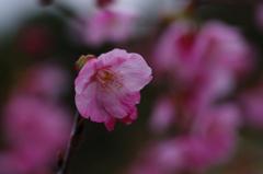 離春(3)