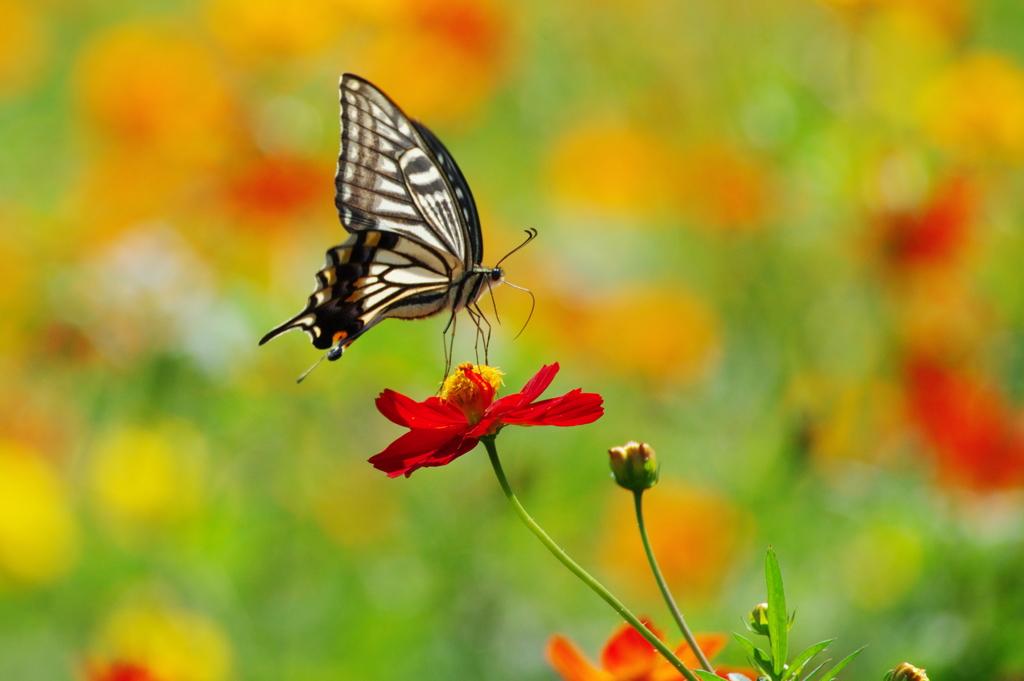 蝶よ花よ(2)