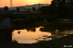 夕景の田んぼ