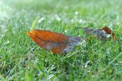 朝露と落ち葉