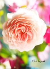 庭の薔薇(ウイリアムモーリス)