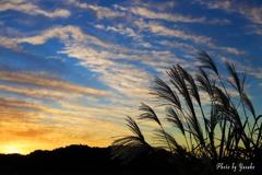 夕日 ススキ 雲 ・・・秋の空ですね~