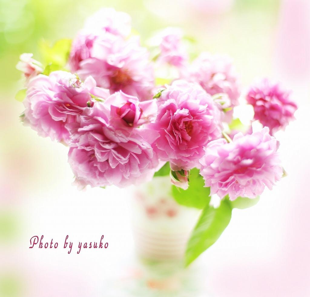 庭の薔薇(ルシエル・ブルー)